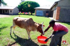 waterwells africa uganda drop in the bucket amusia ajesa-43